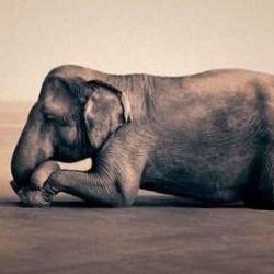 Слонихха