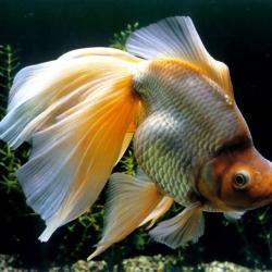 *Рыбка*