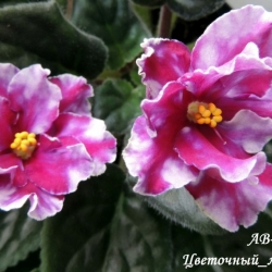 Цветочный_магазин
