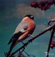 Ptiichka