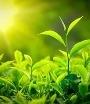 ЗеленоеСолнце